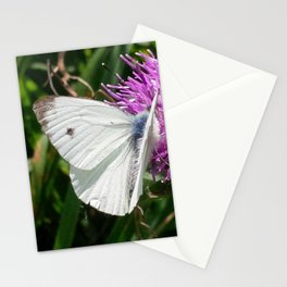 LARGE CABBAGE WHITE BUTTERFLY FEEDING ON KNAPWEED Stationery Cards