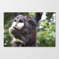llama Canvas Prints featuring Llama by Veronica Ventress