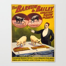 Vintage poster - Trained pigs Canvas Print