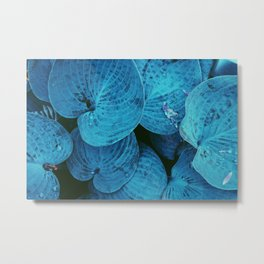 After rain, not in the mood Metal Print