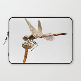 Dragonfly Resting On Seed Head Isolated Laptop Sleeve