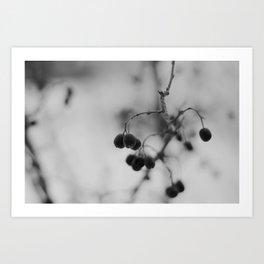 [Fruits d'hiver] Art Print