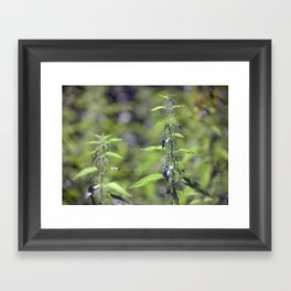 Stinging Nettle 5288 Framed Art Print