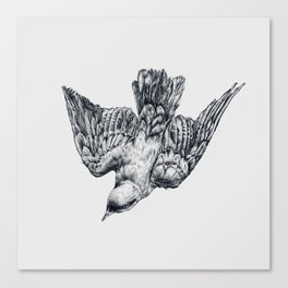 This bird is called a splendid starling Canvas Print