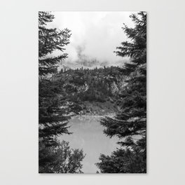 Between Pine (Black and White) Canvas Print