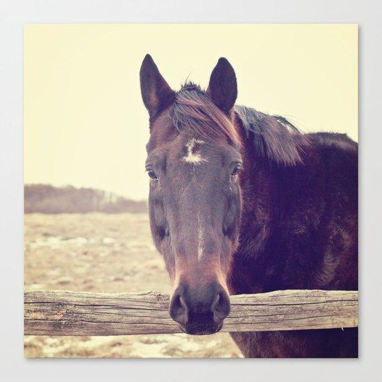 Hello Horse  Canvas Print
