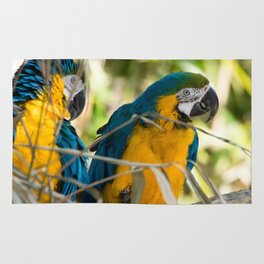 Parrots couple in the tree tops Rug