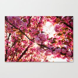 Colorfull spring Canvas Print