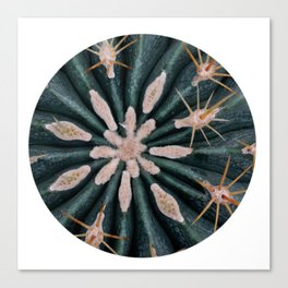 Cactus Plant Close-up Photogrpahy Round Photo Canvas Print