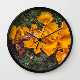 Orange Peel Fungus in Redwood Forest Wall Clock