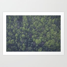FOREST - TOP - VIEW - PHOTOGRAPHY Art Print