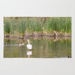 Lone Pelican among the Ducks Rug