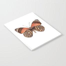 Butterflies: Figure-of-Eight Butterfly Notebook