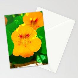 Winter Park Nasturtium 1 Stationery Cards