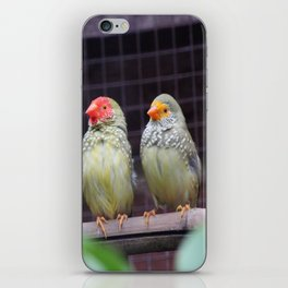 Star Finches iPhone Skin