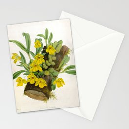 Vintage Yellow Orchids Log Lindenia Collection Stationery Cards
