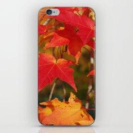 Fiery Autumn Maple Leaves 4966 iPhone Skin