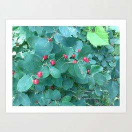 Blue bush berry Art Print