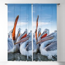 Group Of Spectacular Beautiful Pelican Fishing Feeding Close Up Ultra HD Blackout Curtain