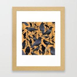 Crow   Corvidae Framed Art Print