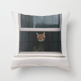 sweet baby window kitty Throw Pillow