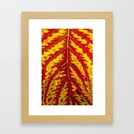 Tiger Leaf Framed Art Print