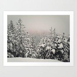 foggy fir forest Art Print