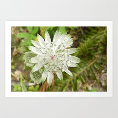 woodland flower Art Print