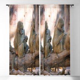 baboon monkey Blackout Curtain