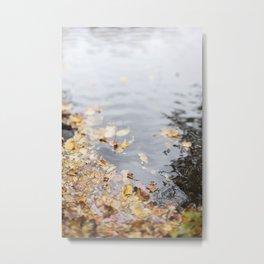 At the Water's Edge Metal Print