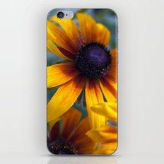 Summer's things - rudbeckia 20 iPhone & iPod Skin
