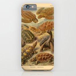Chelonia iPhone Case