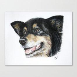 Australian Shepherd Dog Portrait Art Print Canvas Print