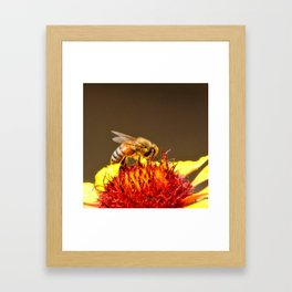 Pollenator at Work Framed Art Print