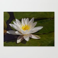 The Last Lily Canvas Print
