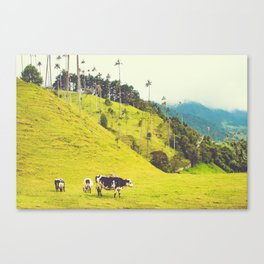 Beautiful Bucolic Countryside in Colombia Fine Art Print Canvas Print