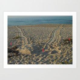 Sea Turtle crawl  Art Print