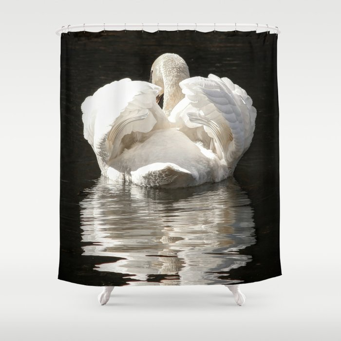 Swans wings wide open Shower Curtain
