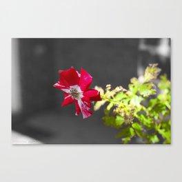 Flower Part 1 Canvas Print