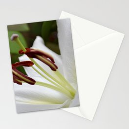 Ready for your Closeup Stationery Cards
