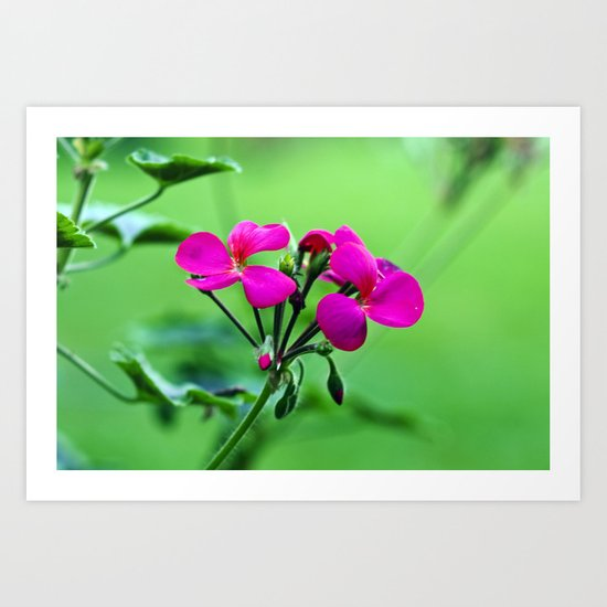 PINK Blossoms before GREEN Art Print