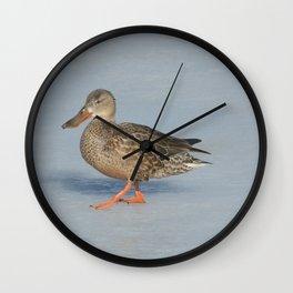 Northern Shoveler Duck Wall Clock