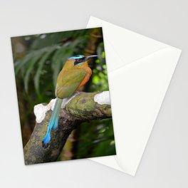 Motmot bird Stationery Cards