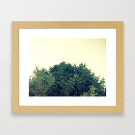 Under The Fir Tree Framed Art Print