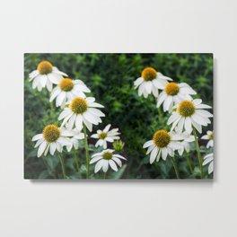 Field of Daisy Flowers  Metal Print