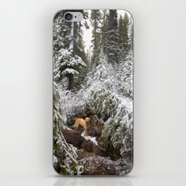 Dog in Snowy Forest iPhone Skin