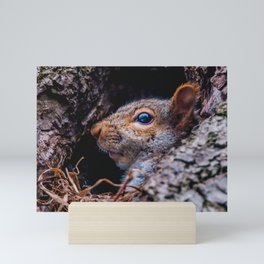 Squirrel At Home Photograph Mini Art Print