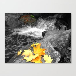 A Splash of Fall Canvas Print