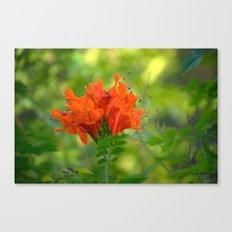 Exotic Ginger Flower Bignone 9125 Canvas Print