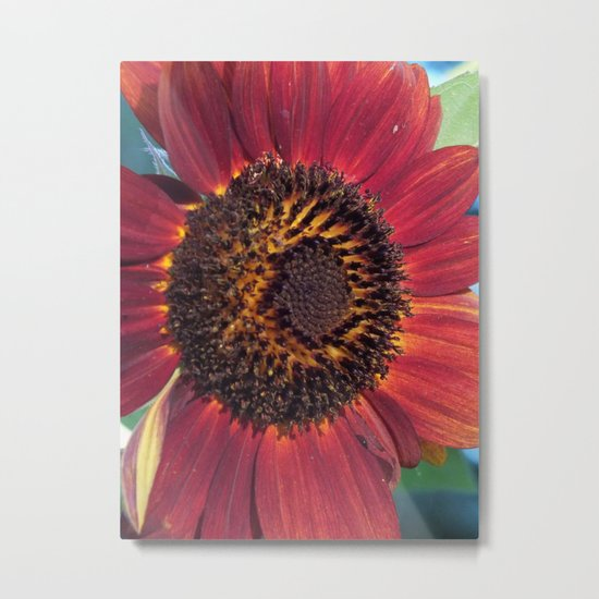 The Red Sunflower Metal Print